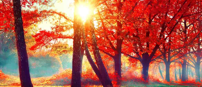 Herfstbos met ochtenddauw in rood en blauw
